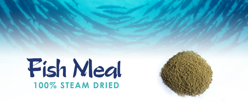 Shamsi Industries:: Fish Meal Producer / Exporter / Supplier in